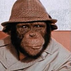 Lancelot Link Secret Chimp